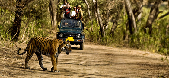 Rajasthan Wildlife Holidays