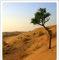 Rajasthan Climate